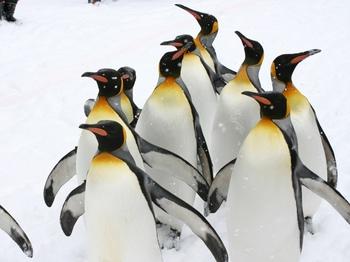 ペンギン002.jpg
