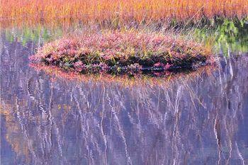 栂池自然園02.jpg