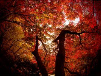 神戸市立公園02.jpg