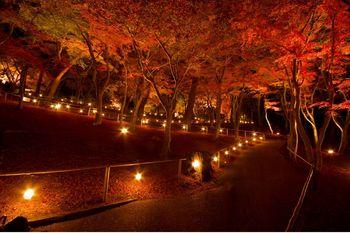 虹の郷ライトアップ.jpg