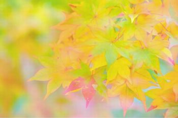 高瀬渓谷01.jpg